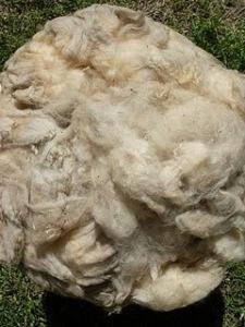 lana+de+oveja+vellon+natural+angol+la+araucania+chile__602347_1